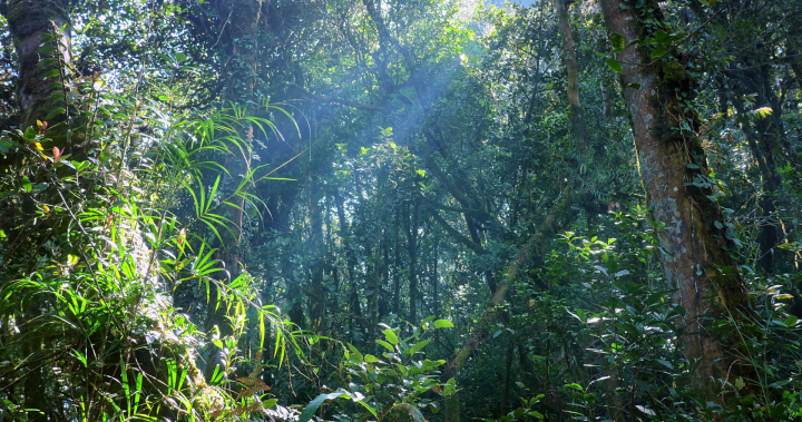 videoblocks-rays-and-beams-of-sun-light-shine-through-jungle-forest-canopy-at-sunny-day-peaceful-and-tranquil-scene-of-wild-tropical-nature-evergreen-rainforest-beautiful-landscape_somck8j-sl_th.png